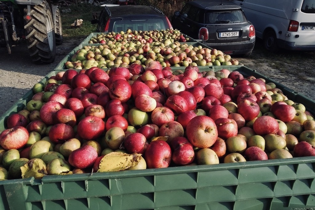 Apfelernte am Haettelihof